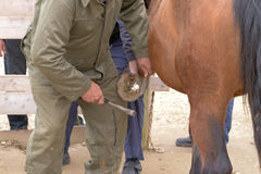 Repairing of horse hoof close up photography Stock Images