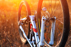 Repairing mountain bike in the forest Royalty Free Stock Image