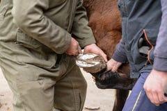 Reparación del cierre del enganche del caballo encima de la fotografía Fotografía de archivo