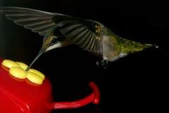 Repas en vol image libre de droits