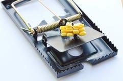 Repassez l'amorce de piège de rat par la graine de maïs sur le fond blanc Photo libre de droits