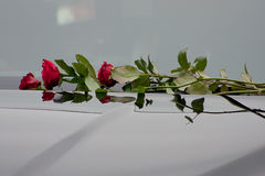 Repatriation. A rose on the windscreen of a hearse carrying the body of a military man repatriated from Afghanistan Royalty Free Stock Photo