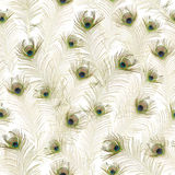 Repeatable Peacock Feathers. Seamless peacock feathers background, isolated on absolute white stock photo