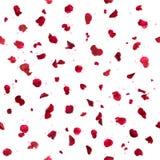 Repeatable Rose Petals och Bokeh Fotografering för Bildbyråer