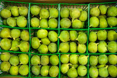 Repeated pattern with baskets of delicious Calimyrna figs. Several plastic containers seen from above containing ripe green Calimyrna figs. Horizontal shot with royalty free stock images