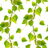 Repeated wallpaper template with green spring leaves of birch Royalty Free Stock Images