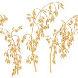 Oats ears pattern. Repeating pattern with oats ears Royalty Free Stock Photos