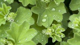 Repellent leaf detail Royalty Free Stock Image