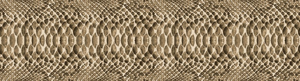 Repetição da textura do teste padrão da pele de serpente sem emenda Vetor Serpente da textura Cópia elegante fundo elegante e à m Fotos de Stock
