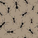 Repeticiones de la hormiga Foto de archivo libre de regalías
