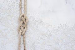 Repfnuren på en vit texturerade konkret bakgrund fotografering för bildbyråer