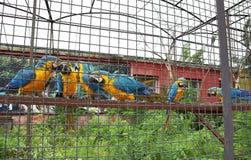 Repite mecánicamente el macaw comunican en una jaula Imagenes de archivo
