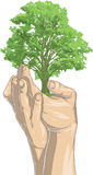 Replanting. Vector illustration of hands replanting a tree Royalty Free Stock Photo