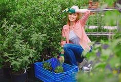 Replanting flowers Stock Photos