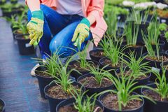 Replanting seedlings Stock Photography