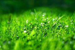 Replete fresh grass. High quality large size photo of grass, close up view, true natural juicy green colors, good composition. Image shows almost macro view of Stock Image