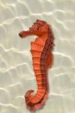 Replica seahorse Stock Photos