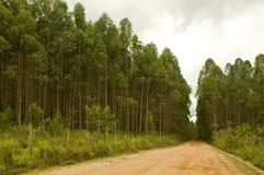Repoblación forestal Foto de archivo libre de regalías