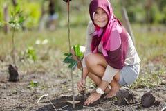 Repoblación forestal del mangle Fotografía de archivo libre de regalías