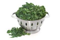 Repolho do Kale fotografia de stock