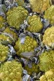 Repolho dos bróculos de Romanesco Foto de Stock