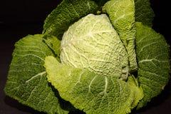 Repolho verde Fotografia de Stock