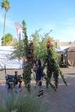 Żywa sztuka: Przeprowadzać wywiad Żywych drzewa obrazy royalty free