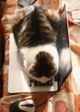 Repos étendu par chat mignon sur le clavier d'ordinateur portable Photos libres de droits