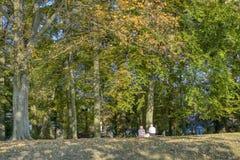 Repos automnal sur un banc de parc image libre de droits