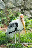 Repos d'oiseau de cigogne Images libres de droits