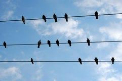 Repos d'oiseaux photographie stock libre de droits