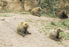 Repos d'ours Image stock