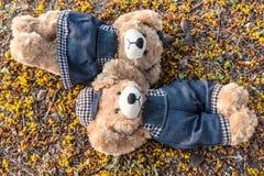 Repos d'ours de nounours de couples sur la terre Photos libres de droits