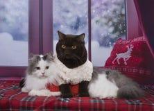 Repos de chats sur la fenêtre en hiver Photo stock