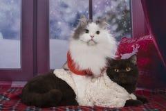 Repos de chats sur la fenêtre en hiver Photographie stock libre de droits