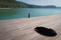 Repos de chien près de la mer Images libres de droits