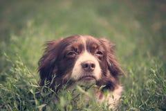 Repos de chien de SSick photos libres de droits