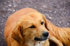 repos de chien sur la terre près de la route Photo libre de droits