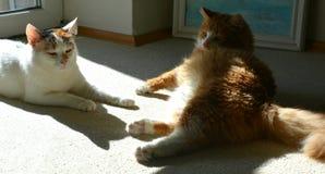 Repos de deux chats Photographie stock