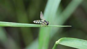 Repos de florea d'api banque de vidéos