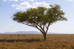 Repos de léopard dans un arbre Photos libres de droits