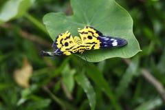 Repos de papillon sur la feuille verte Fond vert photos libres de droits