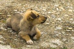 Repos de petit chien Photos libres de droits