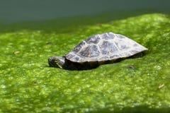 Repos mignon de tortues au soleil Photos libres de droits