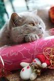 Repos pelucheux de chat photo stock