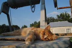 Repos rouge de chat Photo stock