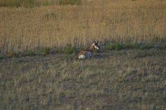 Repos sur un flanc de coteau Photo libre de droits