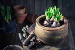 Repotting зеленые растения и старые глиняные горшки в деревянной хате Стоковое фото RF