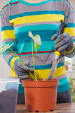 Repotting flowers Royalty Free Stock Images