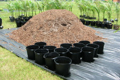 Repotting of Palms. In a Nursery in the Redlands, Florida Royalty Free Stock Images